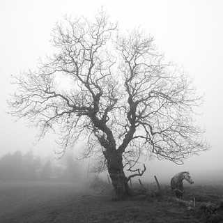 Horse in the Mist 1