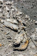 Dead Fish (luke.me.up) Tags: decay niko deadfish saltonsea bombaybeach d810