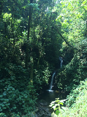 """La Réserve de Monteverde: la cascade <a style=""""margin-left:10px; font-size:0.8em;"""" href=""""http://www.flickr.com/photos/127723101@N04/26671875570/"""" target=""""_blank"""">@flickr</a>"""