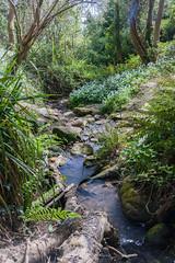 Fairlight Glen, Hastings Country Park (ghostwheel_in_shadow) Tags: england sussex stream europe unitedkingdom burn brook hastings eastsussex hastingscountrypark fairlightglen englandandwales