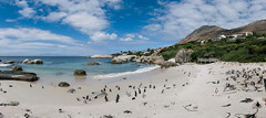 Boulders colony (knipslog.de) Tags: africa beach strand town meer boulders cape pinguin sdafrika simons colony kapstadt twon sout suedafrika