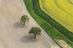 Tree Couple (Aerial Photography) Tags: trees tree field by landscape la oak landwirtschaft feld aerial agriculture landschaft bume baum deu zwei luftbild leaftree eiche luftaufnahme bayernbavaria deutschlandgermany ndb laubbaum deciduoustree ackerbau vilsheim foliagetree fotoklausleidorfwwwleidorfde unterfroschham vilsheimlkrlandshut 05052014
