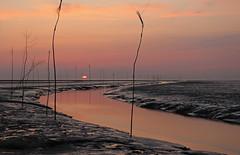 Sonnenuntergang am Watt (svensonkra26) Tags: nationalpark meer nordsee watt kste ebbe priel