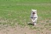 16-05-15_untitled_125 (Daniel.Lange) Tags: dog philadelphia dogs biscuit dogdayafternoon spado columbussquarepark