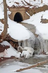 Winter Falls (peterkelly) Tags: winter snow ontario canada tree ice water digital creek canon waterfall stream hamilton valley northamerica ravine dundas culvert 6d pleasantview conservationhalton