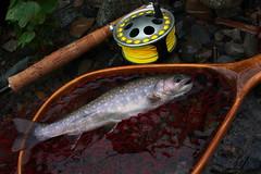 DSC_2777 (touhenboku) Tags: iwana yamame trout fly flyfishing fishing