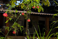 Viveiro-7 (Secom UnB) Tags: plantas jardim prc antonio jardins estufa prefeitura viveiro mudas antnio jardinagem campusdarcyribeiro
