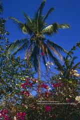 Bali, Padang Bai, colours (blauepics) Tags: indonesien indonesia indonesian indonesische bali island padang bai landscape landschaft blue blau tree baum palm palme colours farben