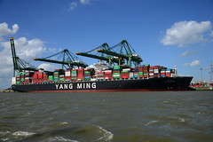 YM Wholesome DST_3998 (larry_antwerp) Tags: yangming ymwholesome 9704611 seaspan psaterminal container noordzeeterminal antwerp antwerpen       port        belgium belgi          schip ship vessel        schelde