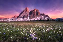 Flower carpet (@hipydeus) Tags: dolomites meadow alm flowers dolomiten sunset mountain crocus landscape nature