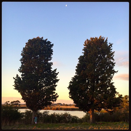 136/365 • two trees with the moon in between - can you spot the four year old hugging the tree on the left? • #136_2015 #4yo #sundown #trees #dusk #blindbight #wanderingblues #moon #wetlands