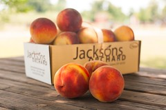 Flaming Fury--2 (Jackson's Orchard) Tags: kentucky peach orchard bowlinggreen bowlinggreenky jacksonsorchard flamingfury