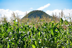 NP Mozambique 5 (CIAT International Center for Tropical Agriculture) Tags: africa drought agriculture maize climatechange mozambique elnino ciat cgiar foodsecurity pabra