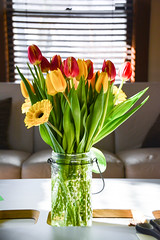 Spring (Meahgan Goeman) Tags: sun plant flower home daisies tulips bouquet