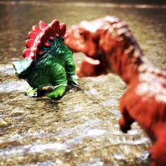 sudden... inevitable... (Chris Blakeley) Tags: seattle toys dinosaur stegosaurus allosaurus hipstamatic seattletoyphotosafari