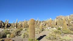 - 2016-05-06 at 22-31-25 + Cactus Island