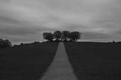 Almhjden, Skogskyrkogrden (annesjoberg) Tags: road trees monochrome clouds blackwhite nikon alm trd vag vg cameraraw nikond3200 nikonphoto almhjden fotosondag fotosndag fs160515