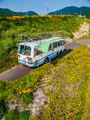 PhoTones Works #7887 (TAKUMA KIMURA) Tags: plant flower nature yellow japan landscape scenery air olympus jp    cosmos   okayama kimura     sulphureus takuma  a01    photones