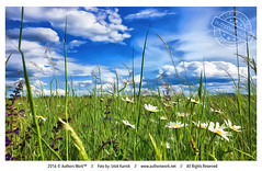 Summer is finally here (Iztok Alf Kurnik) Tags: summer nature beautiful field grass clouds landscape colorful empty postcard magic memories nopeople dreams daisy beautifulnature