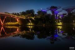 Gardens by the Bay (davidgevert) Tags: park longexposure bridge color water reflections garden pond singapore cityscape earlymorning d750 bluehour marinabay travelphotography beforedawn gardensbythebay marinabaysands nikon2470mmf28 singaporepark davidgevert gevertphotography nikond750