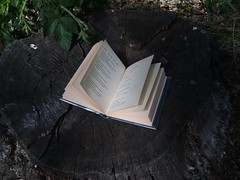 🌲🌱 (katarinakadijevic) Tags: wood nature forest temple photography book spring woods poetry poetic boo poet iphone iphonegraphy jiriorten