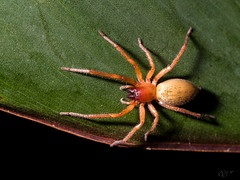 Spider_03 (Z.Jaime) Tags: macro olympus 60mm omd em5