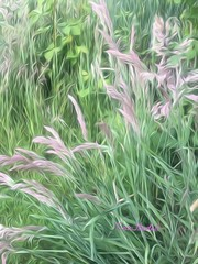 Summer Grass (Tina Stadeli) Tags: painting photography superphoto eiditing