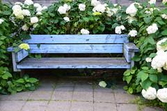 Blue bench (Maria Eklind) Tags: street city lund se sweden sverige cityview skneln