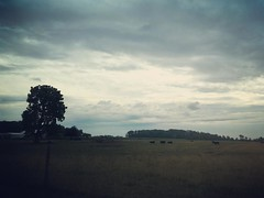 Stormy Sundays. (quirky1978) Tags: nature landscape pasture field ohio rural trees sunday weekend storm foreboding clouds farm cow cattle instagramapp square squareformat iphoneography sierra