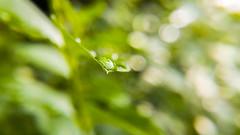 20160723_093309_2 (Roland Papp) Tags: nature macro top explore lg lgg4