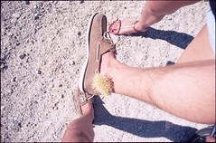 (*johnnyfavorite) Tags: california trip cactus usa film bike analog pain colorado whitewater tears desert pentax kodak palm adventure journey springs epson sonoran portra cholla lx 160 jumpingcactus v700 travek cylindropuntia fulgida killercactusfromouterspace