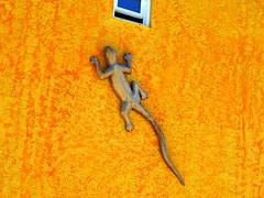 Gocko (AlfredoZablah) Tags: travel traveling photography light live vacation yellow beach tour landscape art bird birds fashion family fun garden macro old classic sea trip surf surfers waves sunday sunny miami florida bahamas norwegian crucero cruise sky babes brazileñas brazilians belize belizean roatan honduras ambegris ambergis cailker caye cayo key bikinis natura delfines dolphins nadando olympus reflex uro e510 zuiko digital 70300mmed modelos playas sol arena flickr flickrs kids smile paparazzi