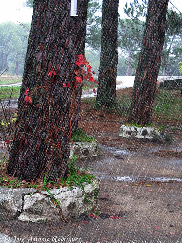 """Lluvia • <a style=""""font-size:0.8em;"""" href=""""http://www.flickr.com/photos/133275046@N07/18175426465/"""" target=""""_blank"""">View on Flickr</a>"""