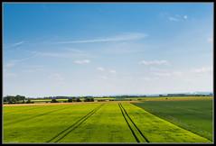 Rapsfelder in Frhsommer (rapp_henry) Tags: blue sky field landscape nikon sommer feld spuren wiese himmel gras grn blau landschaft sonne gree d800 nikond800