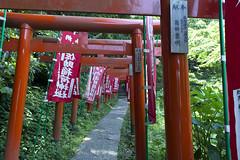 path_PBN4680 (pbnewton) Tags: bridge japan tokyo rainbow buddha great hasetemple yuigahamabeach kotokuintemple enoshimaisland odaibaisland nikond4 rhetoricru enodentrain pbnewton kamakurahighschool sasukeshrine kamakuracoast