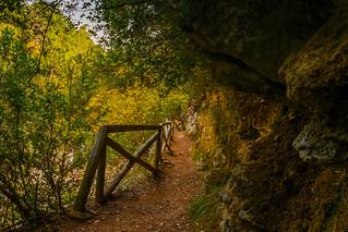 Senda junto al Río Borosa - Sierra de Cazorla
