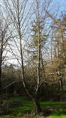20160331_092033 (ks_bluechip) Tags: creek evans trails preserve sammamish usa2106