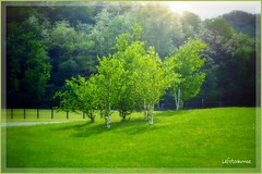 ....verde speranza (lefotodiannae) Tags: verde colore piante speranza lefotodianbae