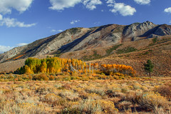 Mammoth Lakes Fall Colors (Jeffrey Sullivan) Tags: california autumn trees usa fall jeff colors digital forest canon eos rebel october unitedstates 2006 sullivan aspen mammothlakes easternsierra inyonationalforest monocounty xti
