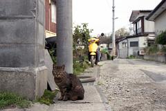 20160424-30 (GenJapan1986) Tags: film animal japan cat island  miyagi   2016     nikonnewfm2   fujifilmfujicolorsuperiapremium400  sabusawajima