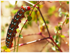 Unicornio (Paulina58) Tags: naturaleza macro plantas colores gusano paulina airelibre 2016 unicornio paulina58
