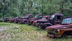 The Club (Terri Toll) Tags: old abandoned rural truck vintage junk nikon rust florida decay ruraldecay htt d610 oldcartruck nikond610 happytruckthursday