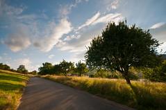 The Road (koDesign) Tags: road sky sun tree clouds cherry schweiz switzerland nikon strasse himmel wolken sonne baum abendsonne d300 kirschbaum baselland frenkendorf sigma1020mmf456exdchsm baselbiet