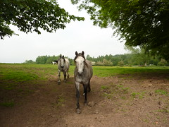 Horses (jkw_fire_horse) Tags: horses animals equines templesowerby