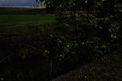 20160618-DS7_6694-6696.jpg (d3_plus) Tags: street sky plant mountains nature field japan bug nikon scenery nightshot dusk illumination daily  streetphoto nightview 28105mmf3545d toyama nikkor ricefield     dailyphoto  riceplant  28105 lightdisplay     28105mm   zoomlense        28105mmf3545 toyamapref d700 281053545 nikond700  aiafzoomnikkor28105mmf3545d  28105mmf3545af photoshopcc sankyovillage aiafnikkor28105mmf3545d