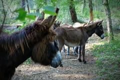 Pompéjac - Pinpin et Pilou (1) (Office de Tourisme du bazadais) Tags: et parc pinpin rennes pilou landes gironde animalier bazadais sudgironde girondines pompéjac
