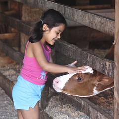 Petting (Read2me) Tags: farm cows hornstra cye animal girl child candid calf pet thechallengefactory fence pen gamewinner challengeclubwinner superherowinner friendlychallenges squareformat perpetualwinner x2 pregamewinner