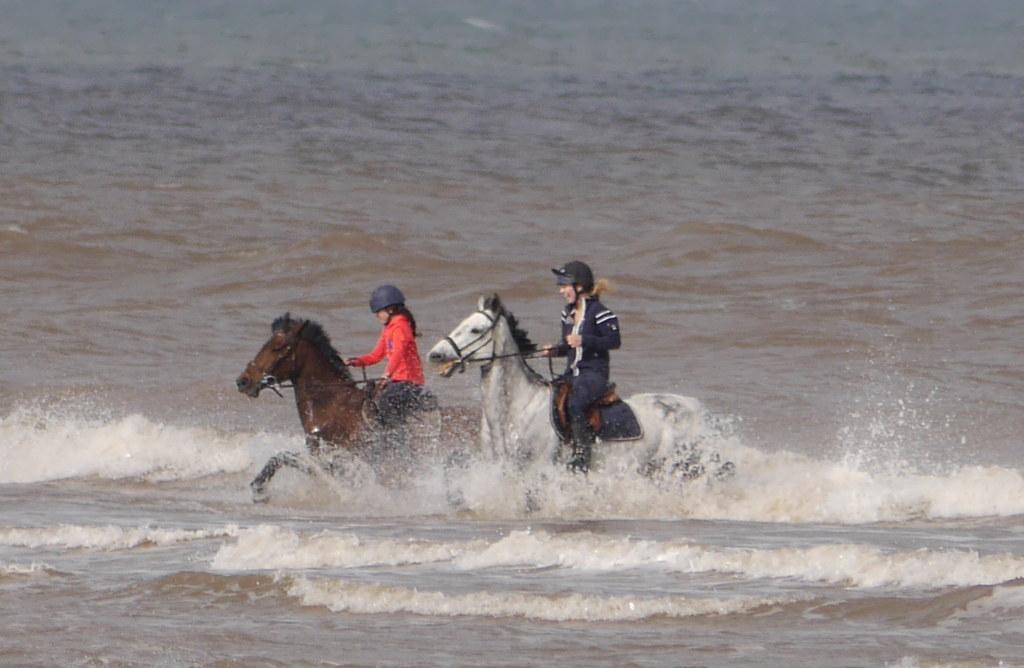 Sea Horse Happiness