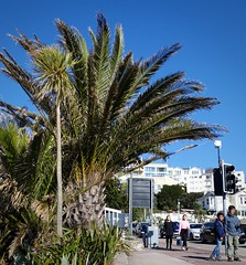Torquay (Torquay Palms) Tags: street uk blue england sky people west english phoenix beautiful 30 canon island photography eos bay spring riviera britain south united country hill great kingdom palm m devon promenade gb april canary date tor seafront torquay palmera ef canaria westcountry devons the torbay 2016 22mm shedden canariensis pcanariensis