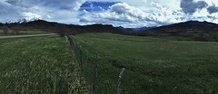 Fenceline (The VIKINGS are Coming!) Tags: ranch colorado cattle alpine rockymountains grazing cuchara